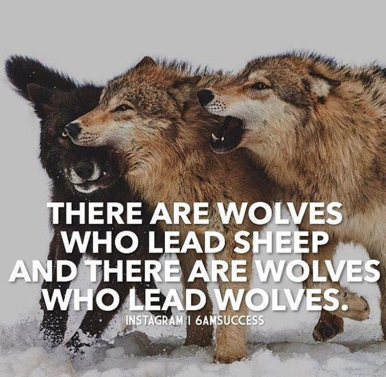 Wolves who lead wolves leader quote.